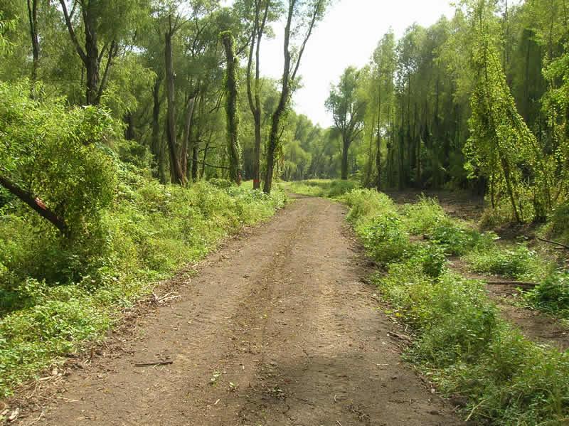 Backwoods trails on Chactaw Island Wildlife Management Area