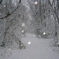 Wintertime area hiking trails